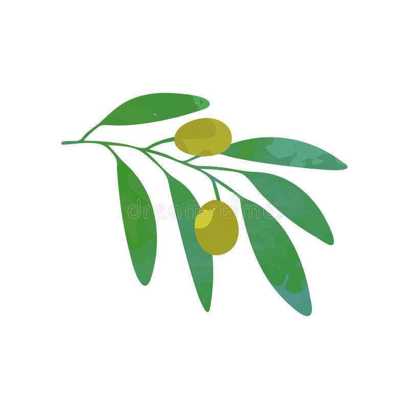 Oliven auf Niederlassung mit grünem Laub Natürliche Nahrung Symbol des Friedens Entwerfen Sie Schablone für Logo, dekorativer Pro lizenzfreie abbildung
