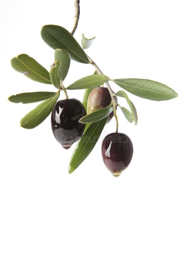 Oliven, die Olivenöl durchsickern stockbild