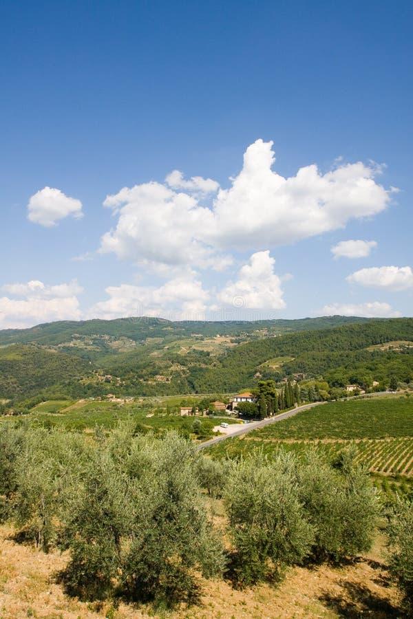 Olivenbäume in Toskana stockfoto