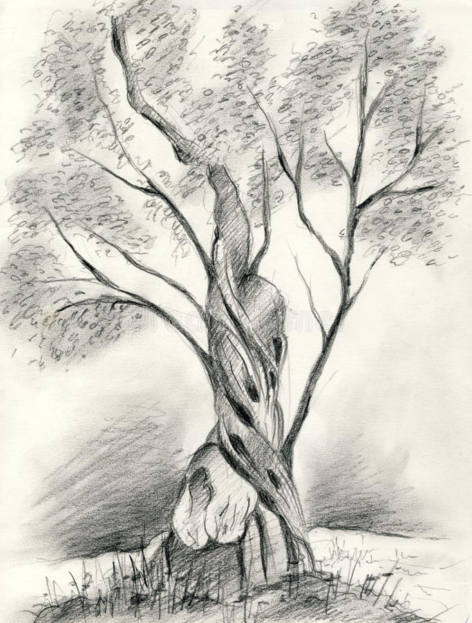 Olivenbaum lizenzfreie abbildung