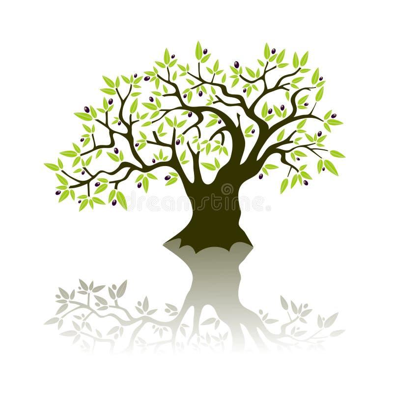 Olivenbaum stock abbildung