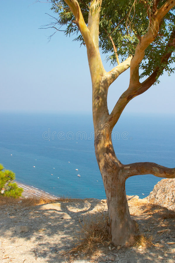 Olivenbaum, Santorini, Griechenland lizenzfreies stockbild
