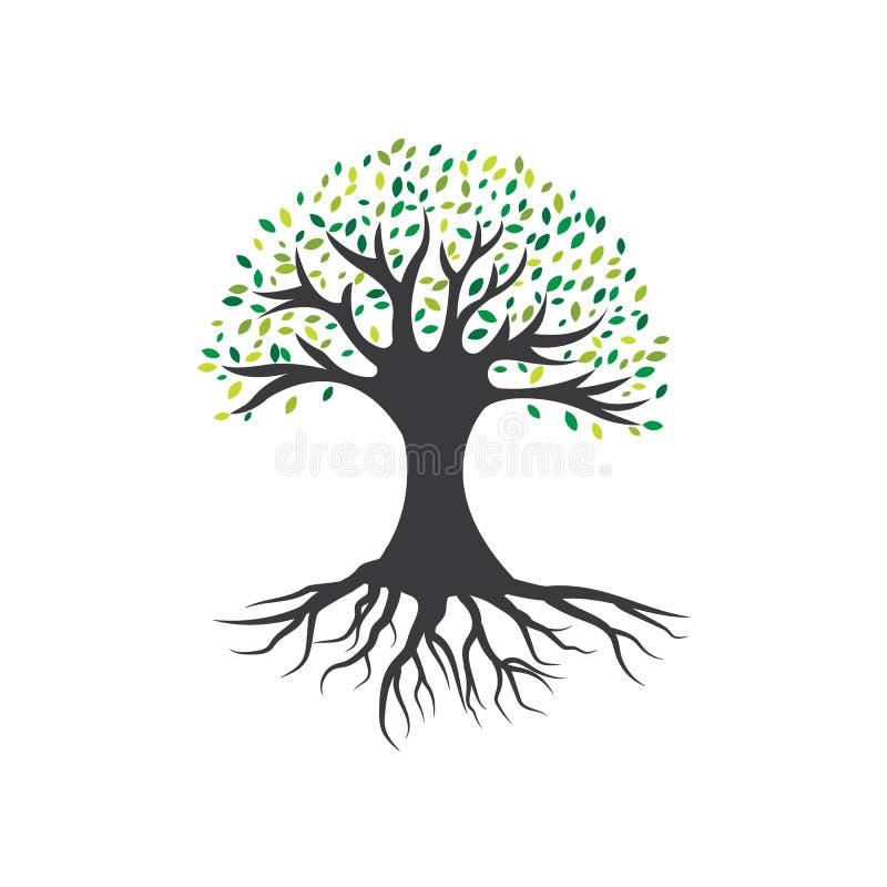 Olivenbaumvektorillustration stock abbildung