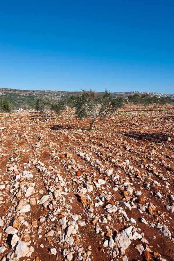 Hügel von Galiläa stockbilder