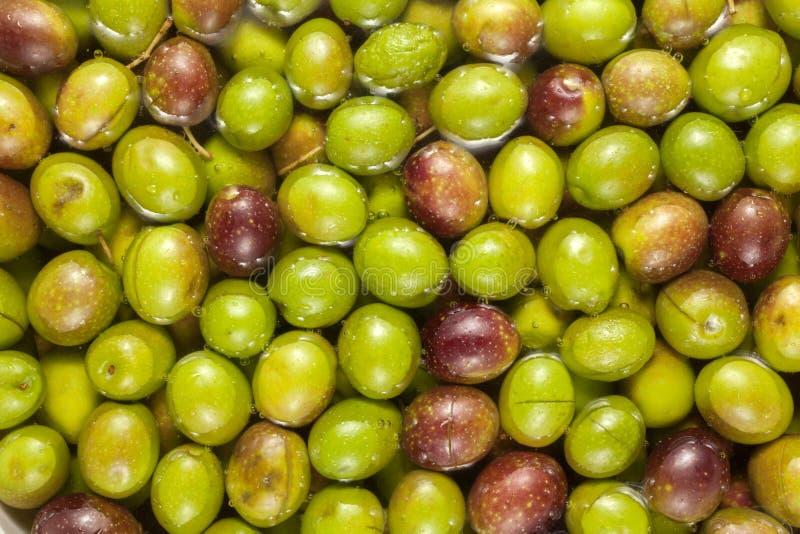 Olivenhintergrund stockbild