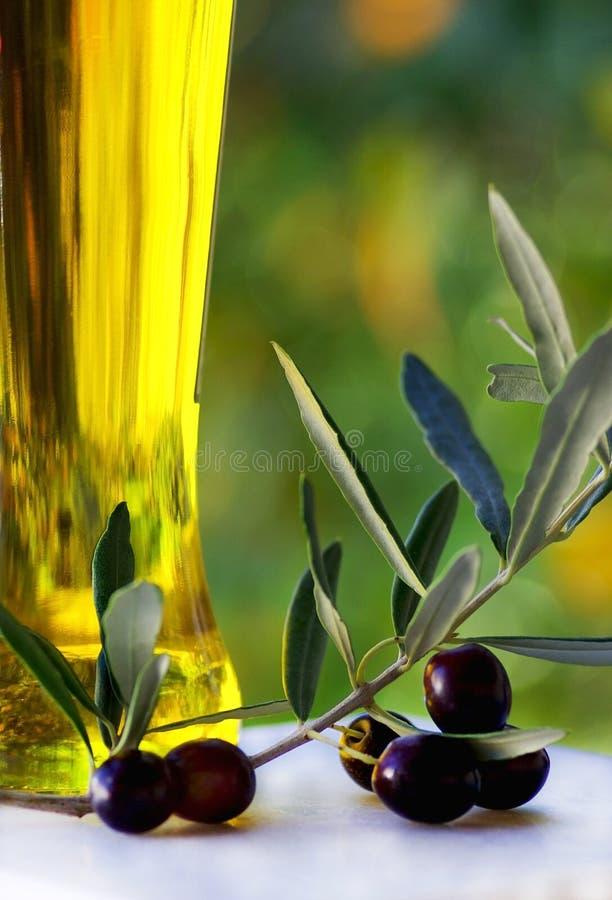 oliveoilolivgrön arkivbild