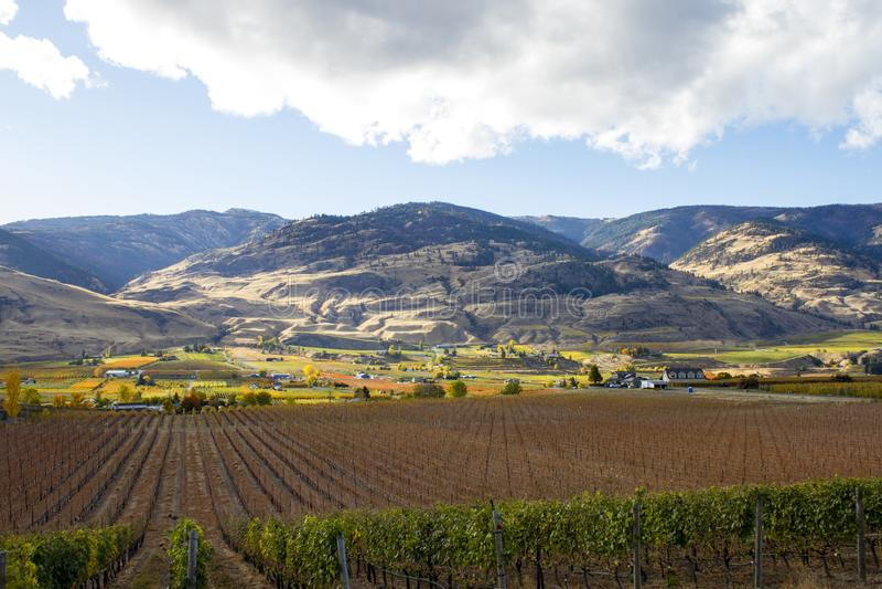 Oliver Okanagan Valley Vineyard British Columbia royalty free stock photography