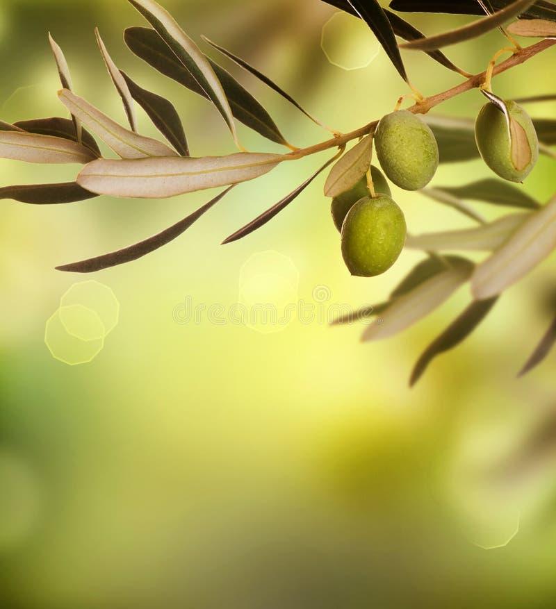 Download Olives stock image. Image of element, garden, fruit, border - 21064977