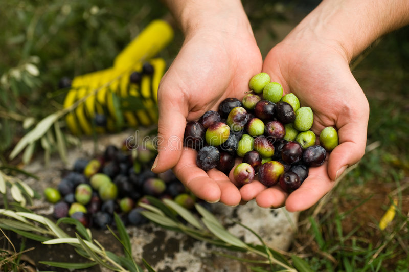 Download Olives Royalty Free Stock Photography - Image: 6803907