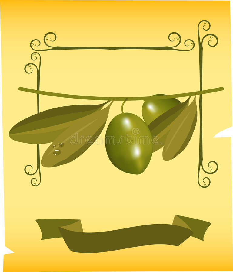 Olives on branch royalty free stock image