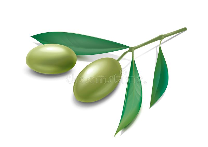 Olives branch stock photography