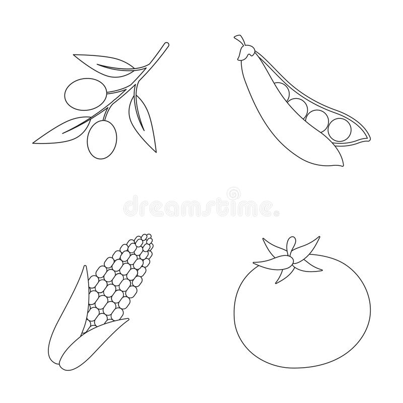 Olives on a branch, sweet peas, corn cob, red tomato. Vegetables set collection icons in outline style vector symbol vector illustration