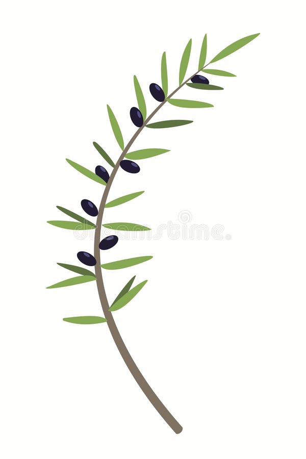 Olives de branche illustration de vecteur