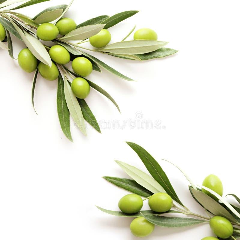 Olives frame background royalty free stock photography