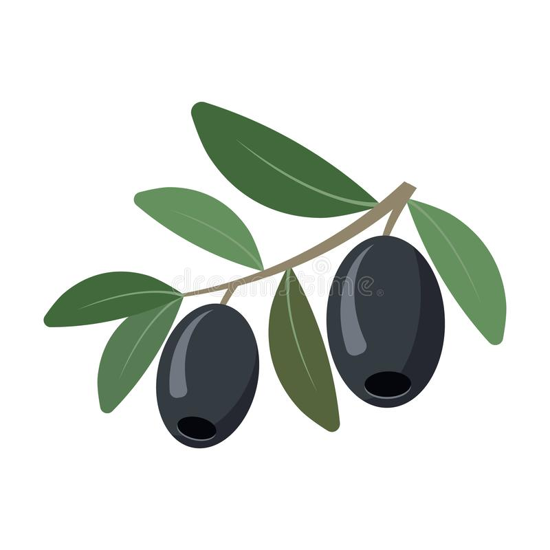 Olives isolated on white background. Vector illustration stock images