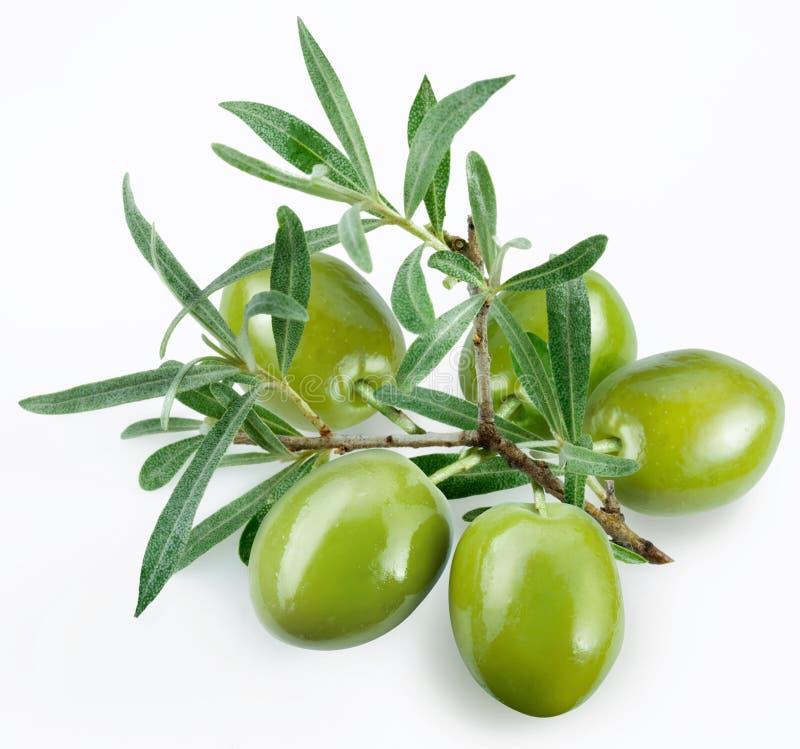 Olives vertes avec un branchement photographie stock
