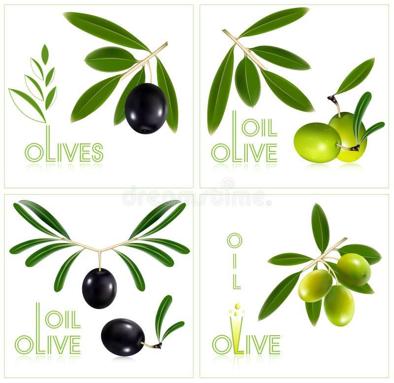 Olives vertes et noires avec des lames. illustration de vecteur