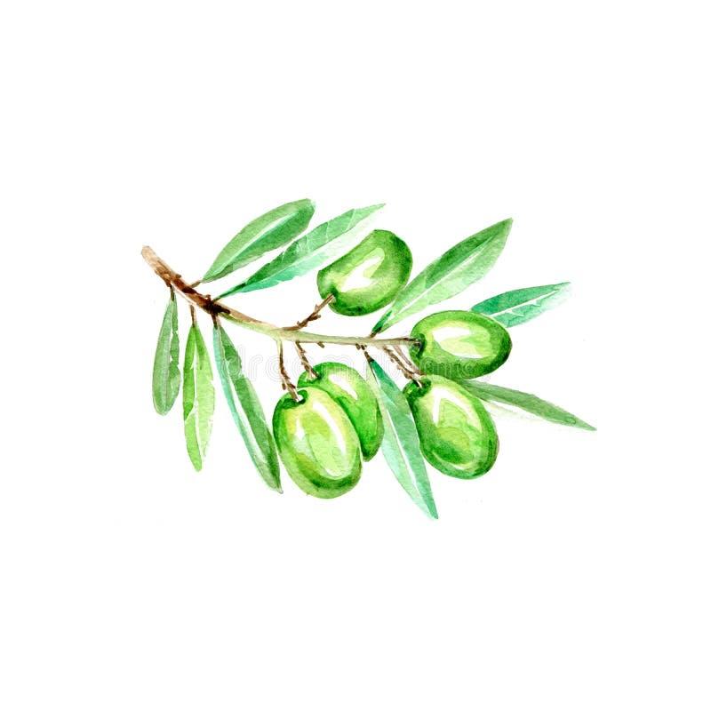 Olives royalty free illustration