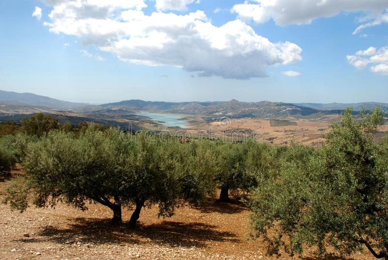 Oliveti, Axarquia, Spagna. fotografie stock libere da diritti