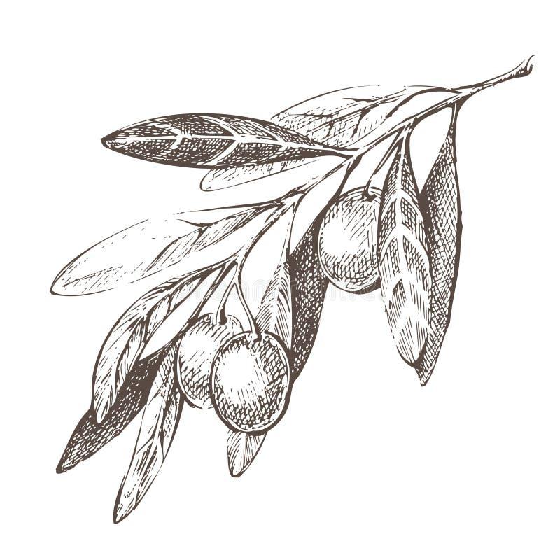 Olivgrön filial vektor illustrationer