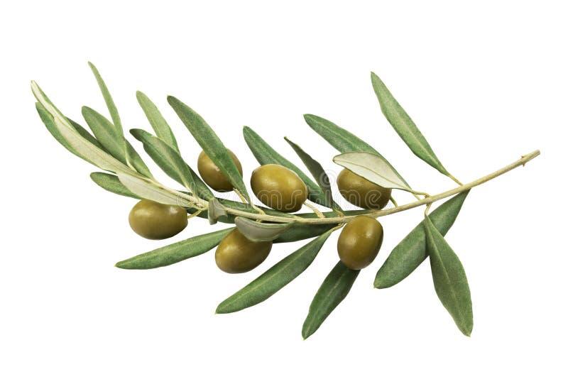 Olivgrön filial med gröna oliv på en vit bakgrund royaltyfria bilder