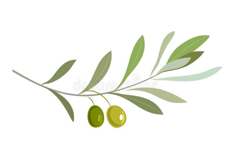 Olivgrön filial med sidor och oliv stock illustrationer