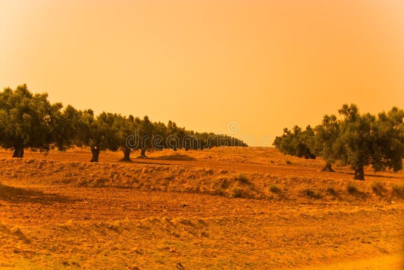 Olivgrüner Garten lizenzfreies stockfoto