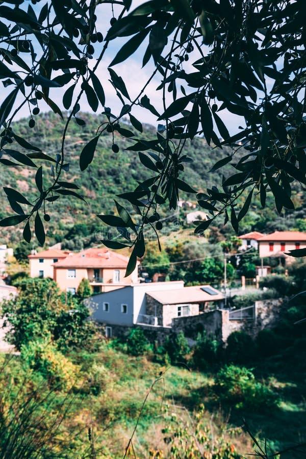 Olivier avec des olives sur le paysage foncé et italien plan avec la vieille ville de bâtiments sur le fond image stock