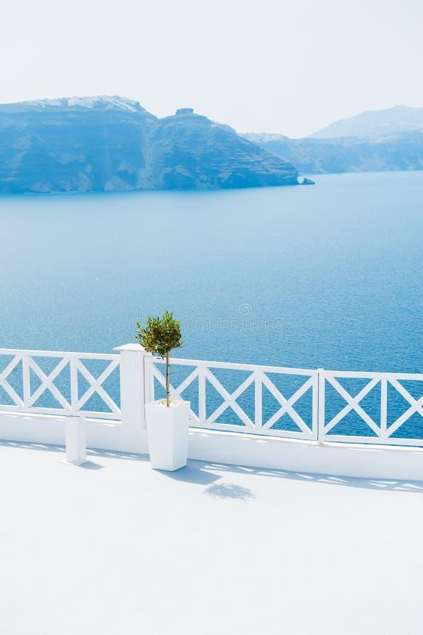 Olivier sur la vue de terrasse et de mer image stock