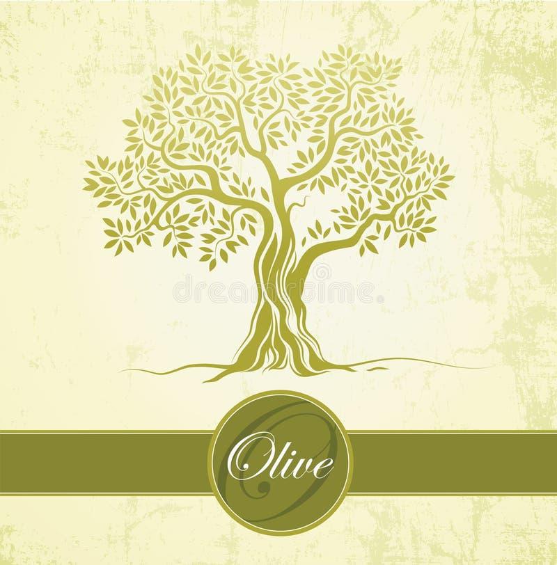 Olivo. Aceite de oliva. Olivo del vector en el papel del vintage. Para las etiquetas, paquete. libre illustration