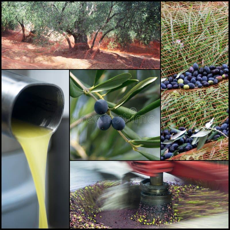 Olivoljaproduktion arkivbilder