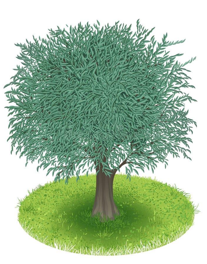 Olivträd stock illustrationer