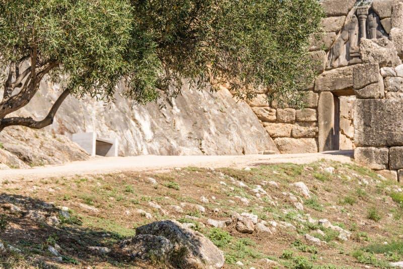 Olivträd framme av lejonporten, Mycenae, Grekland royaltyfria bilder