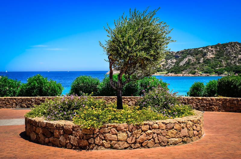 Olivträd i härlig trädgård på havkusten arkivbild