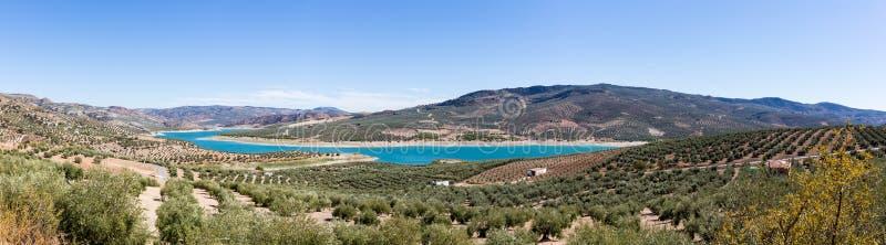 Olivträd runt om sjön Iznajar i Andalucia royaltyfri foto