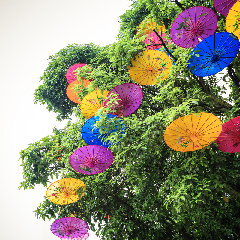 Oliwiący papierowy parasol wieszający w drzewie zdjęcie stock