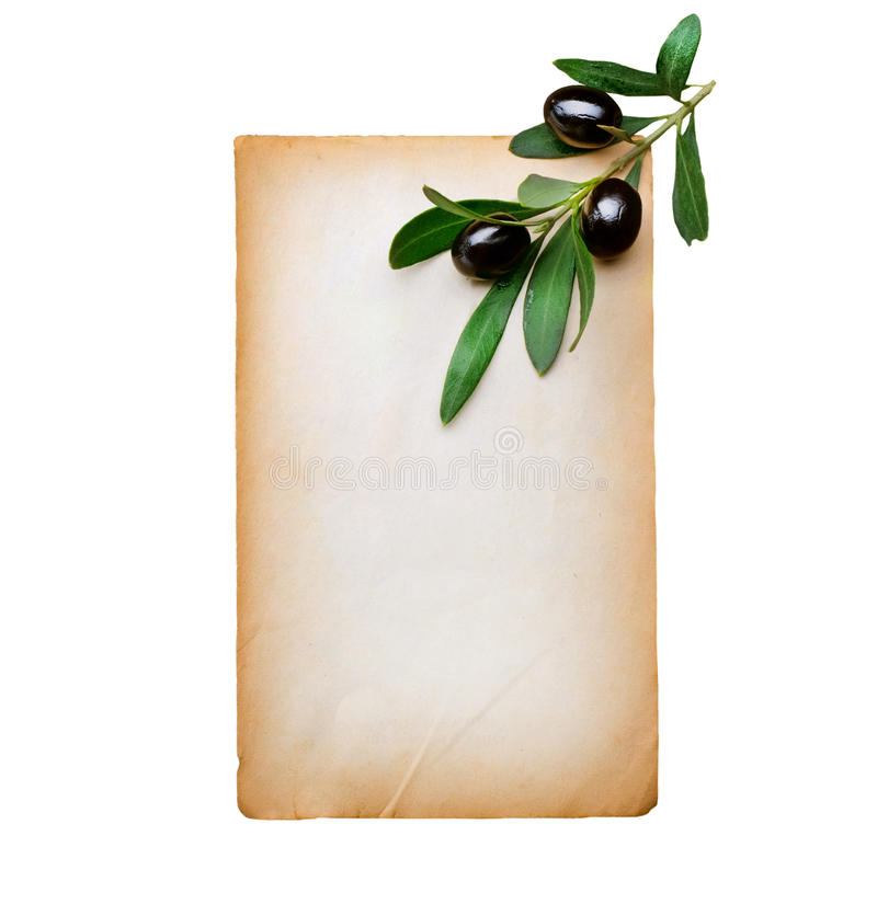 oliwka gałęziasty papier fotografia stock
