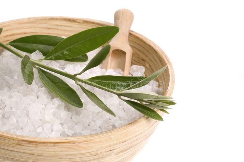 oliwki gałęziasta soli w wannie obraz royalty free