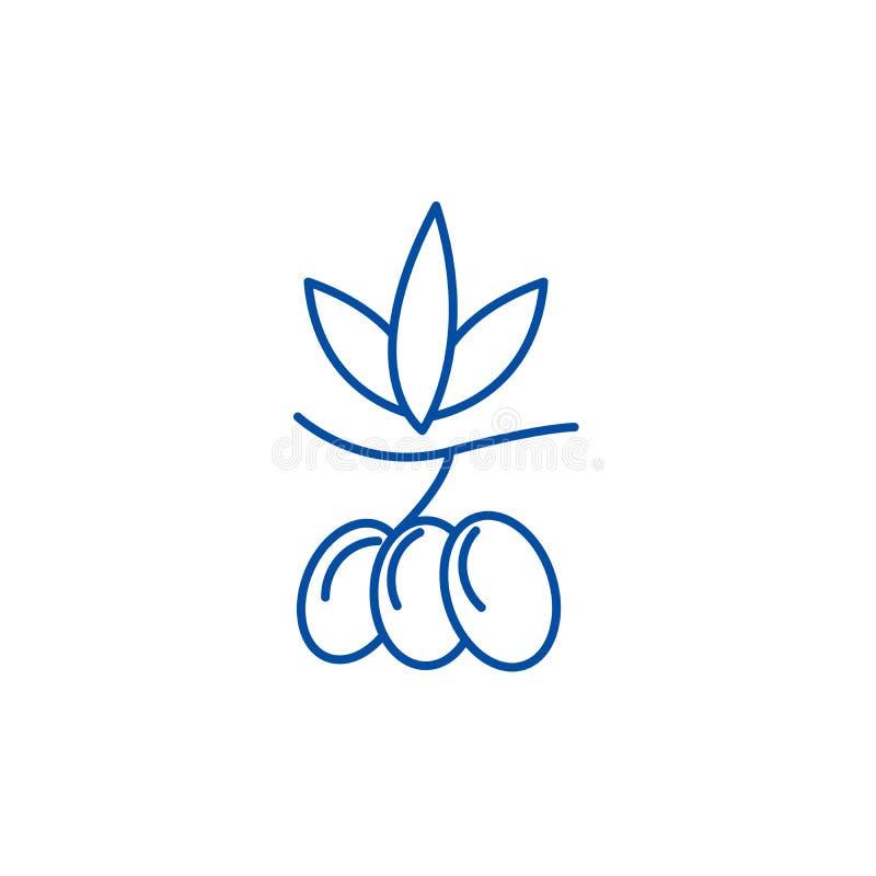 Oliwki wykładają ikony pojęcie Oliwka płaski wektorowy symbol, znak, kontur ilustracja ilustracja wektor