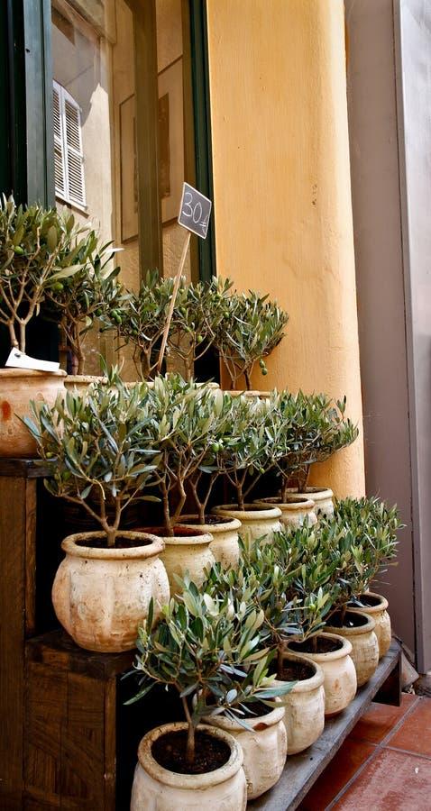 oliwni Provence sprzedaży drzewa zdjęcia royalty free