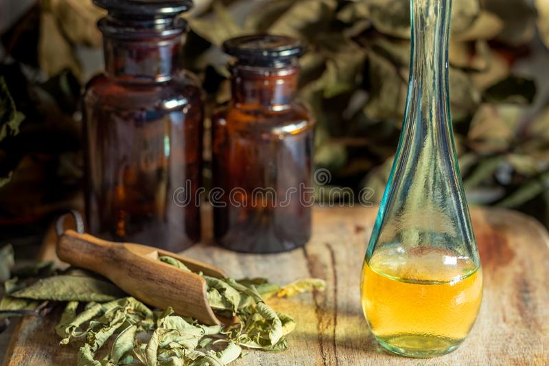Olja och extrakt av örter och aromatiska medicinalväxter arkivbilder