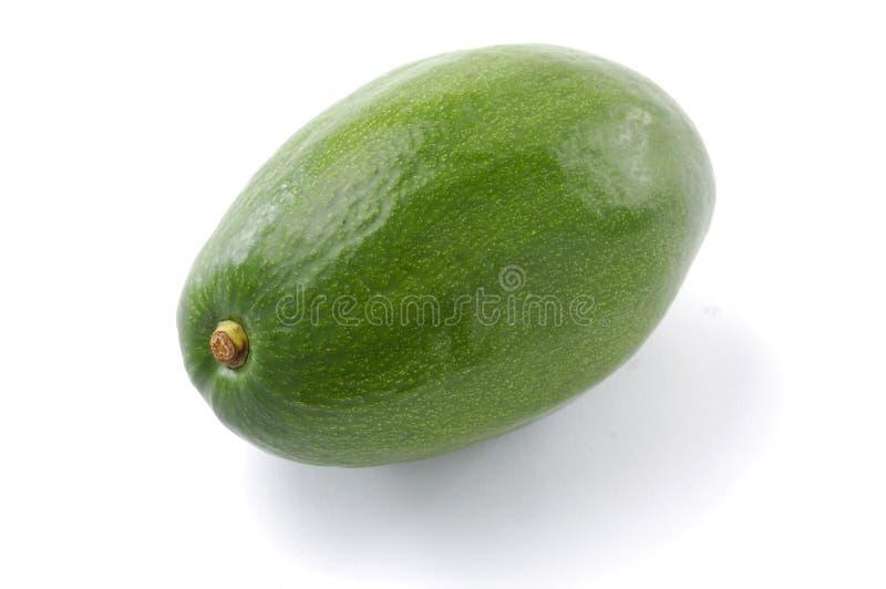 oljig avokado royaltyfri fotografi