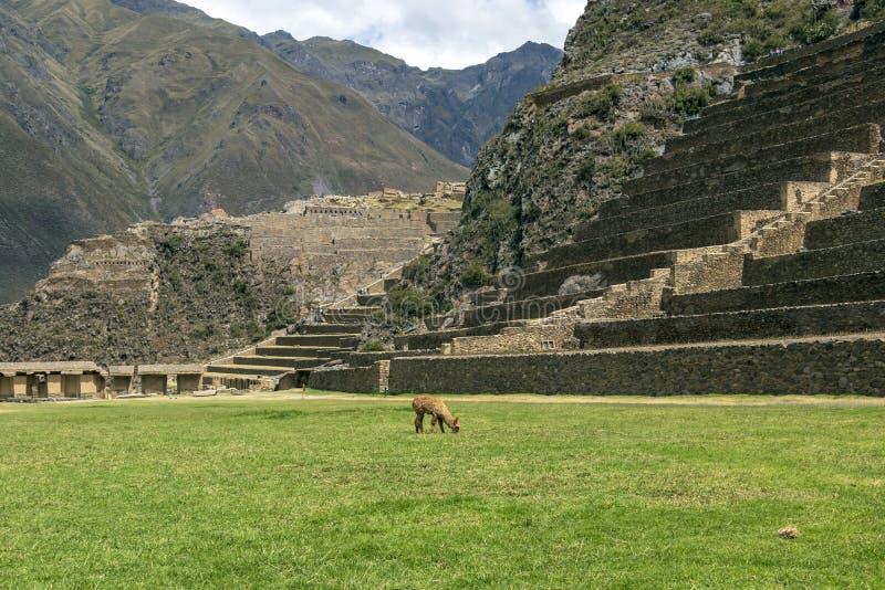 Ollantaytambo-Ruinen, eine enorme Inkafestung mit großen Steinterrassen auf einem Abhang, touristischer Bestimmungsort in Peru lizenzfreie stockfotos