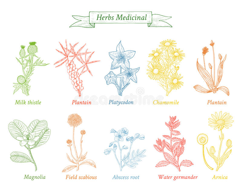 Ollection of hand drawn Spices and Herbs. stock photos