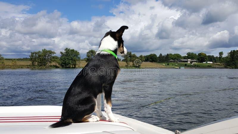 Ollie& x27 ; tour de bateau de s image stock