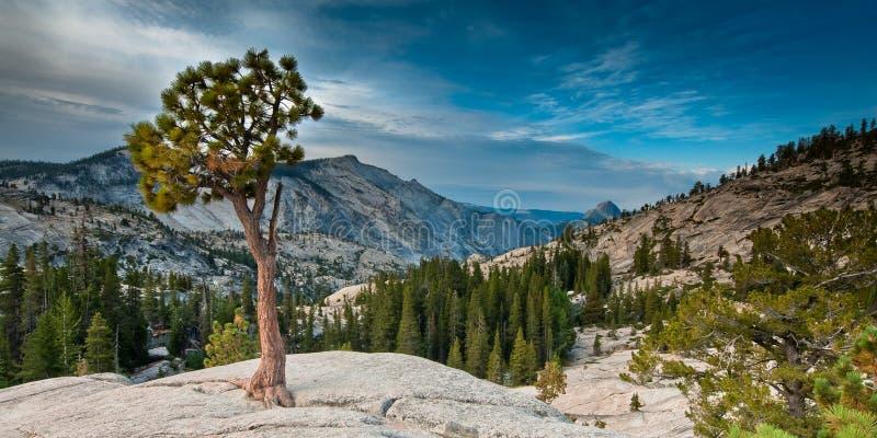 olmsted punkt Yosemite zdjęcia royalty free
