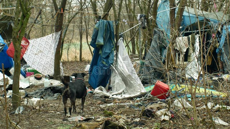 OLOMOUC TJECKIEN, JANUARI 2, 2019: För för gettotält och hund för ark hemlös lya för byggnad för chalet för folie för trä plast- royaltyfri fotografi