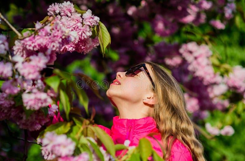 olor del flor, alergia muchacha feliz en flor de la cereza Floraci?n del ?rbol de Sakura Silla de cubierta en la playa en Brighto fotos de archivo libres de regalías