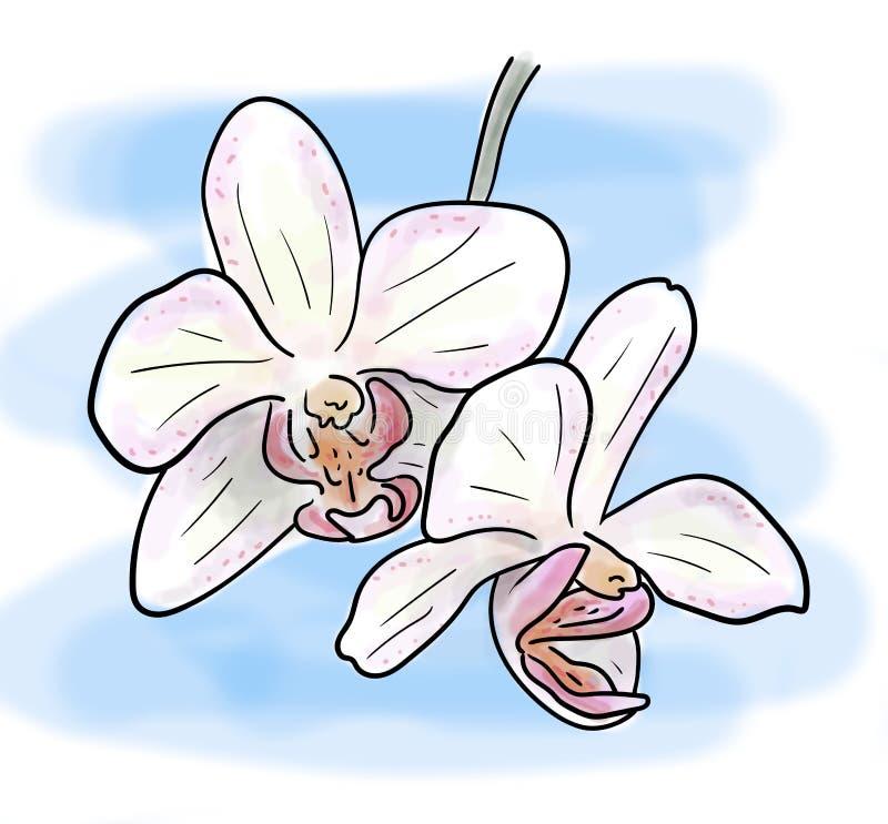 Olor-Skizze der rosa Orchideenblume auf blauem Hintergrund, handgemalte Zeichnung des Entwurfs stock abbildung