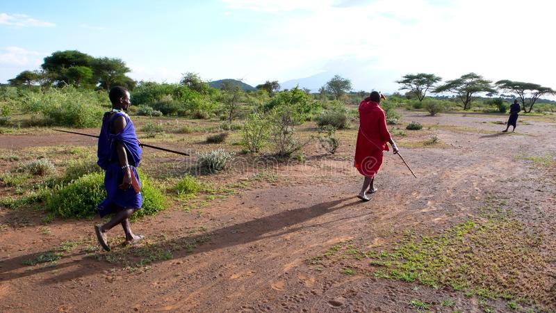 Traditional Masai tribesmen in the savannah of Tanzania in west Africa royalty free stock images